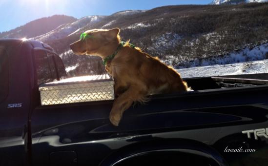 Dog Cruzing Up Parleys Canyon