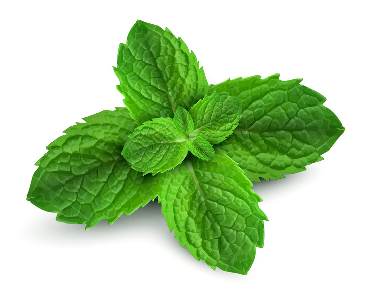 Mentha Piperita Facts Mentha Piperita is One