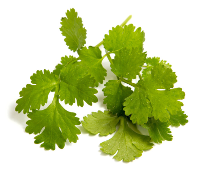 Coriander:Cilantro-did you know