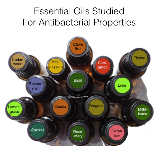 Studied for Antibacterial Properties