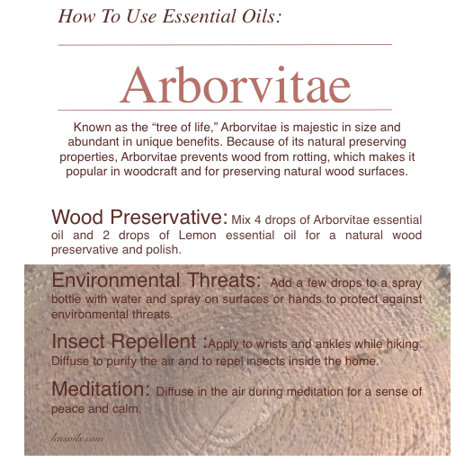 How to Use Arborvitae Essential Oil