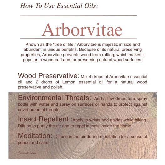How to Use Arborvitae Essential Oil