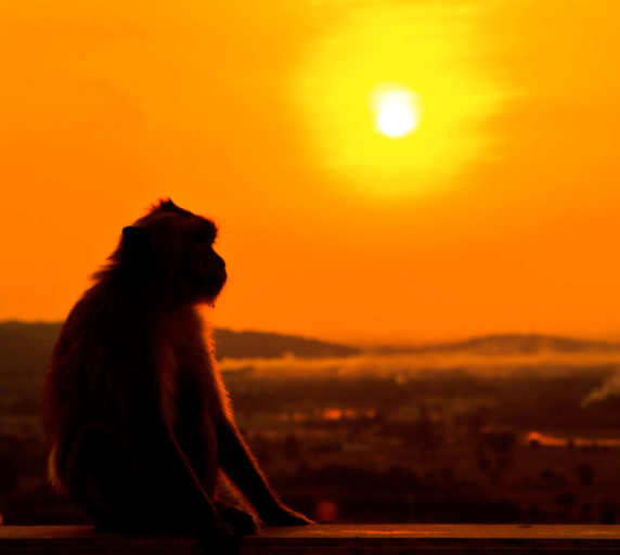Monkey at Sunset