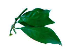 petitgrain-orange-leaf