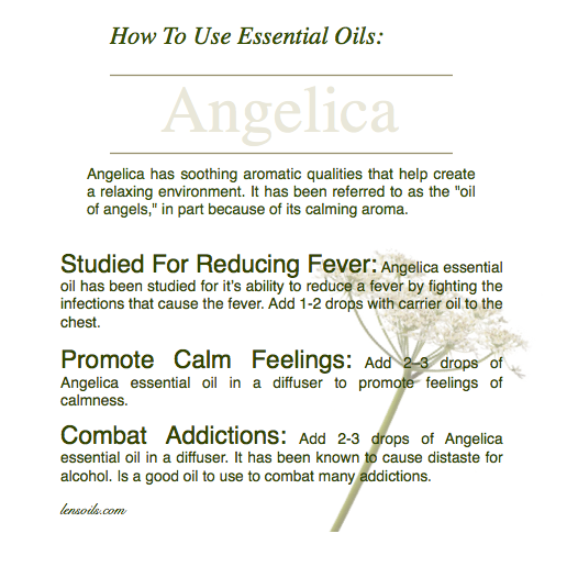 How to use Angelica Essential Oil